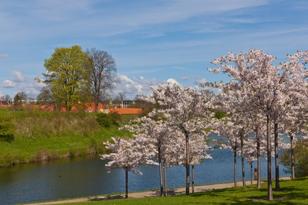 City park in the spring, Copenhagen, Denmark Stock Photo - 11915897