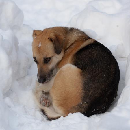 yeux tristes: Chien errant avec des yeux tristes sur la neige