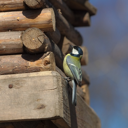 bird (Parus major) on a small wooden house Stock Photo - 17061184