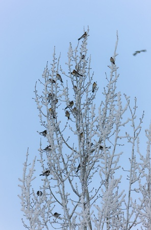 flock of birds on a tree in cold day photo