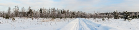 Rural road through the winter woods, panorama photo