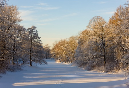 landscape in winter park with snow-covered trees photo