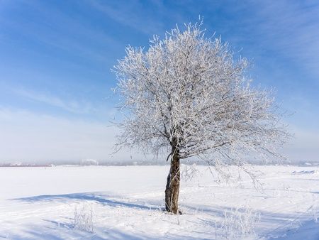 lonely tree on a cold winter day photo