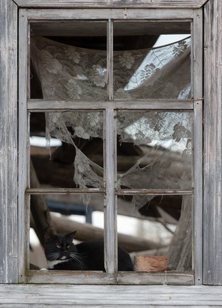 black cat in the window of the destroyed wooden house photo