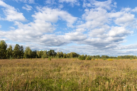 yellowing: field with yellowing grass and forest edge in early autumn Stock Photo