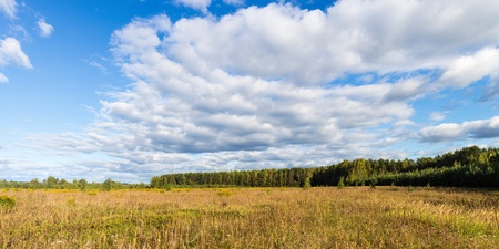 field with yellowing grass and forest edge in early autumn photo