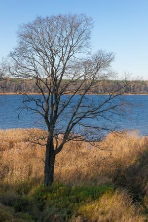neva: autumn landscape on the river, Neva, Russia