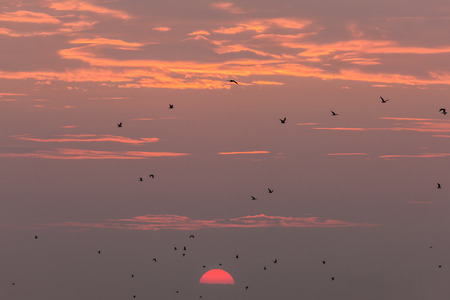 a flock of seagulls in flight at sunset photo
