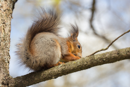 squirrel sitting on a tree branch closeup photo