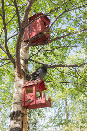 pigeon holes: birdhouse feeder and dove on a birch Stock Photo