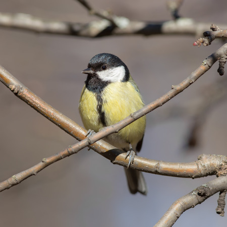 titmouse sitting on a tree branch closeup photo