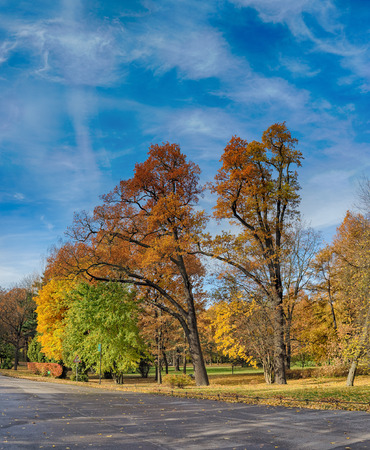 landscape in the park with autumn trees photo