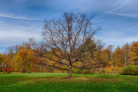 lonely oak tree in sunny autumn park photo