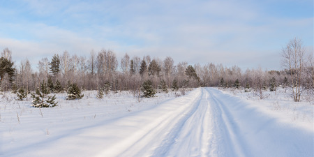 rural forest landscape on a cold winter day photo