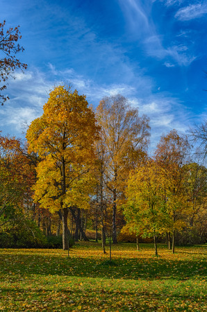 bright sunny landscape with autumn trees in the park photo