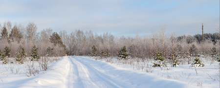 rural forest landscape on a cold winter day, panorama photo