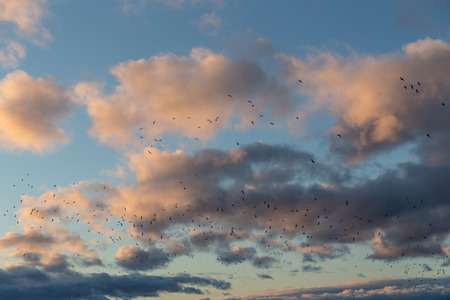 large flock of gulls on the sky background photo