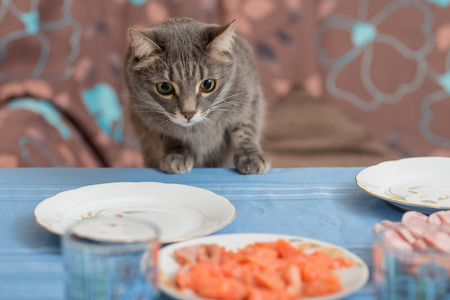 to steal: cat trying to steal some food from a dining table
