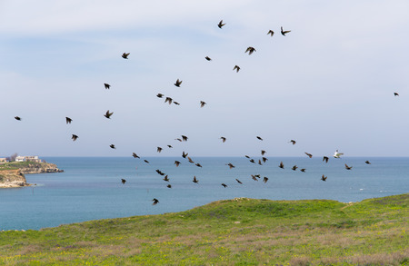 a flock of starlings at the sea photo