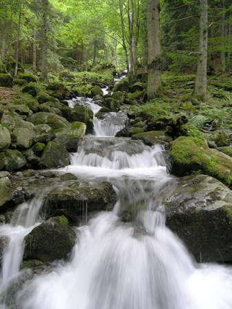 yin y yan: Arroyo de montaña en los Vosgos Alsacia - Francia