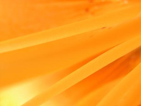 ablooming: Closeup estrema all'interno di un incendio Lily - Lilium bulbiferum ssp.croceum