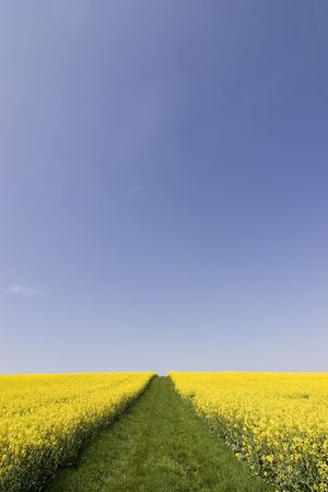 A way of grass leading into the sky between two fields of rapeseed photo