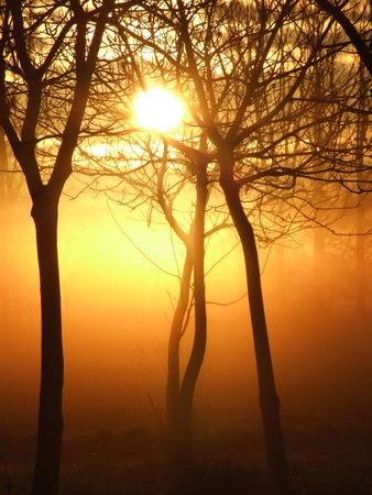 Mystical sunrise in a forest on a misty morning photo