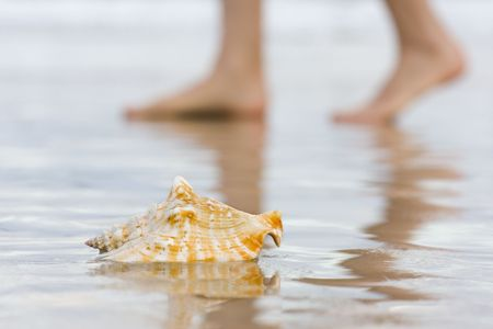 Shell on a beach with blurred bare feet in the background photo