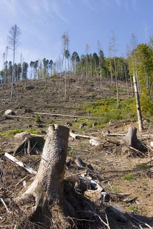 deforested: Deforested area in a forest with cutted tree in the foreground Stock Photo