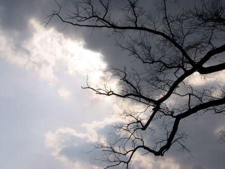 land slide: Storm tree