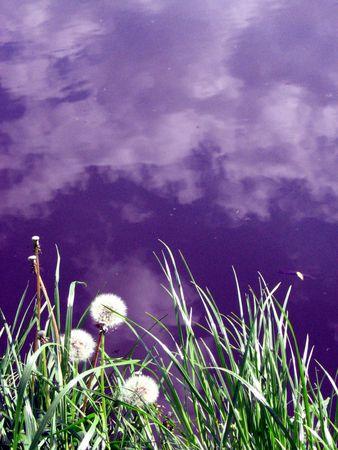 purple sky photo