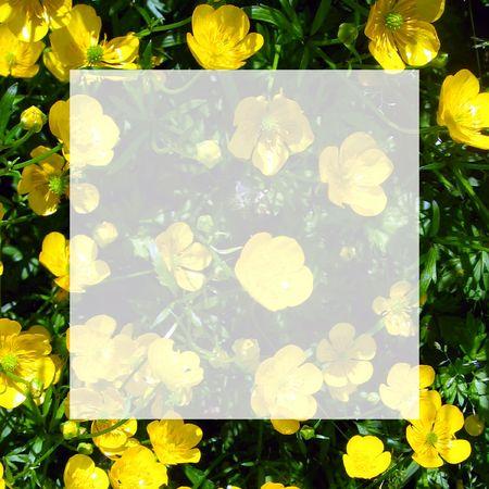 buttercup: Buttercup Notecard_transparent