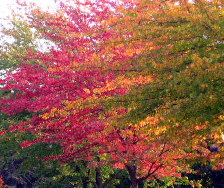 changing color: El oto�o los �rboles cambiando de color