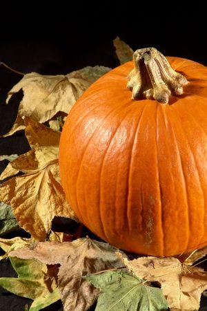 Halloween pumpkin Stock Photo - 518004