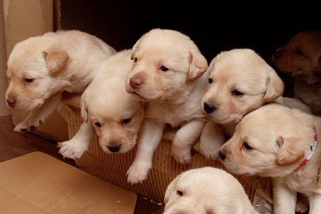 babes: Puppies leaving the house