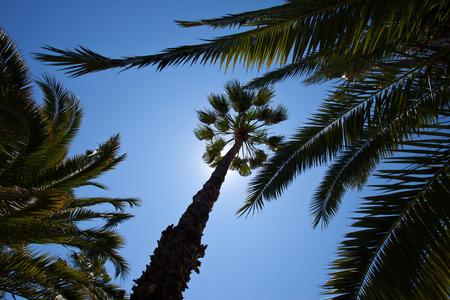 tropical trees against a blue sky photo
