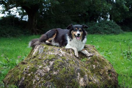 lassie: Beautiful collie lassie on small Irish farm Stock Photo