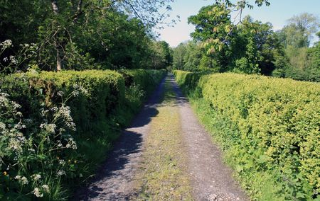 Scenic rural road through national park in the grounds of Birr castle county Offaly Ireland Stock Photo - 4963004