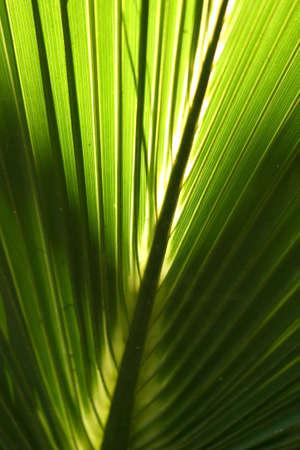 palmetto: Palmetto Fern III