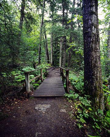 treetrunk: Bridge Stock Photo