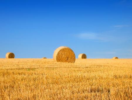 A newly harvested field with a lot of bales of hay           photo