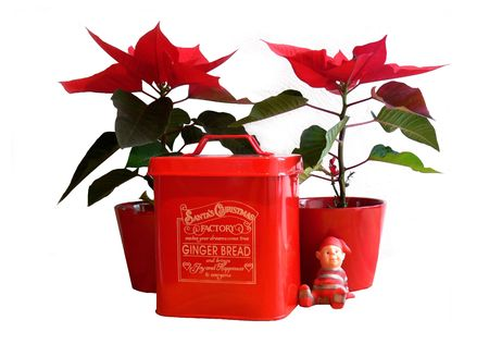 Ginger bread in a  tin can accompanied by two christmas flowers and a small Santa Stock Photo - 2225295