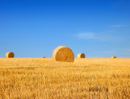 A newly harvested field with bales of hay           photo