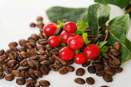 Ripe coffee berries and beans