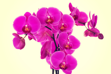 day spa decor beautiful violet orchid on a branch stock photo: day orchid decor