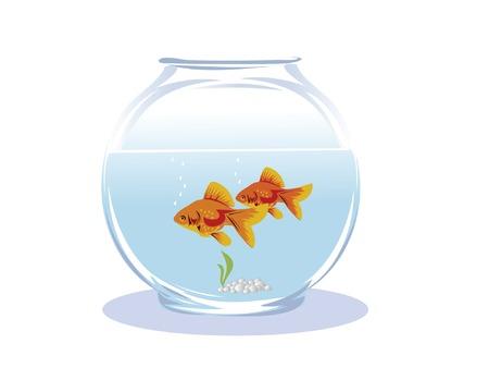 two goldfish in a glass aquarium
