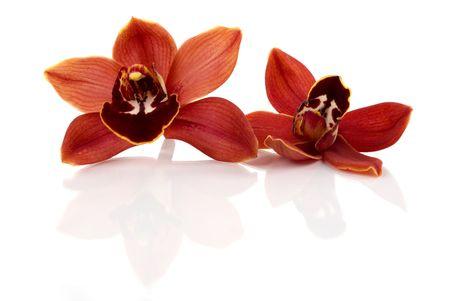 Beautiful fresh orchids