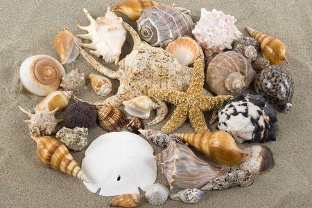Seashells on sand photo
