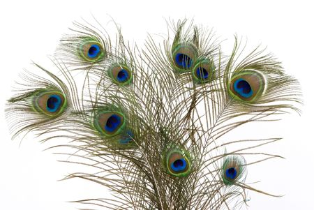 peacock feathers: Bouquet of peacock feathers
