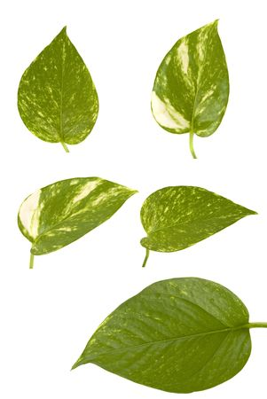 Diferentes tama�os y formas de hojas Foto de archivo - 1808427